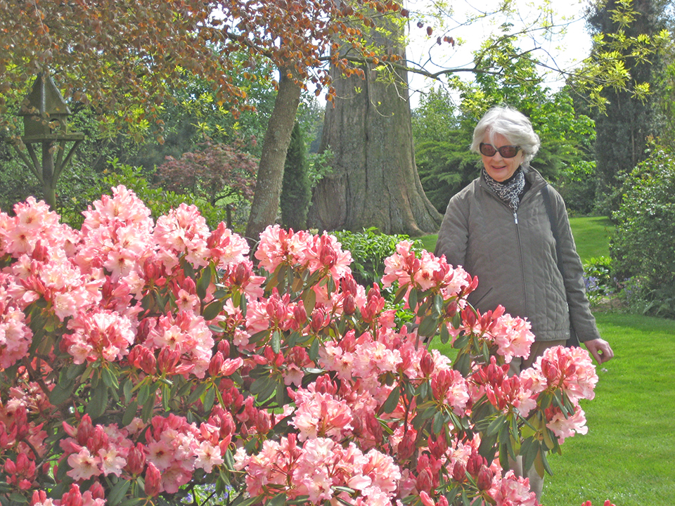 Rhododendron Gardens in Flower - MoaTours