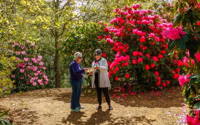 Visitors to Cross Hills Garden in the Manawatu enjoying Rhododendrons in flower
