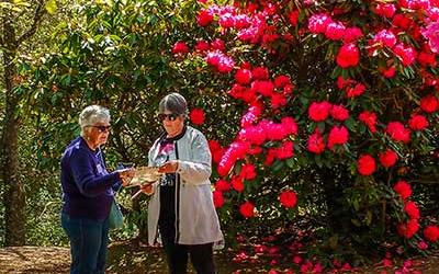 Visitors to Crosshills Garden in front of flowering Rhododendrons