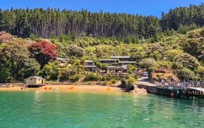 Pohutakawa in flower in the Marlborough Sounds