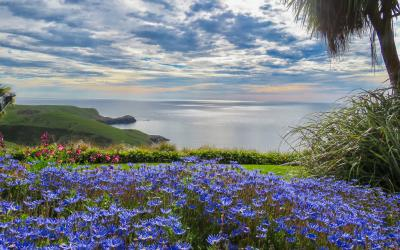 Spring flowers and ocean views at Fisherman's Bay Garden Akaroa