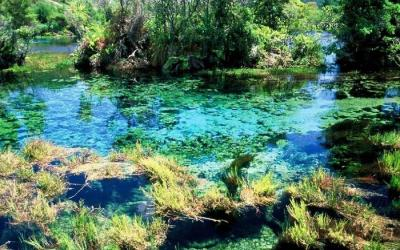 Clear waters of Waikoropupu Springs - Molesworth Station Tour