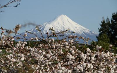 Views of Mt Taranaki in spring with cherry blossoms