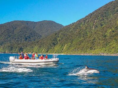 Dolphins jumping next to the Milford Mariner tender, Milford Sound