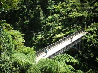 Aerial photo of walkers on the Bridge to Nowhere, Whanganui River